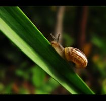 Snail by sara-nmt