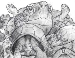 Turtle Faces by Rachet777