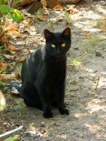 Black Cat009 by effing-stock