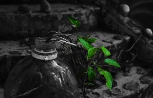 Branching from the bottle by yoge1993