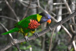 Parrot in the Wild by pehlx94