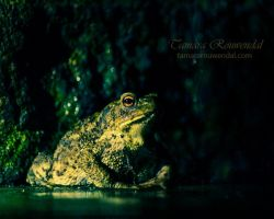 Toad by TammyPhotography