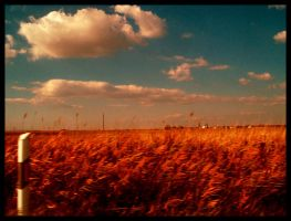 land of golden fields by siby