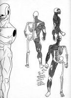 Anatomical Sketches by nickybeats