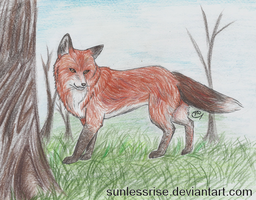 Red Fox by SunlessRise