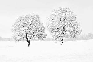 two winter trees by herbstkind