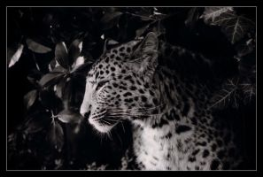 Panther. by sekhmet-neseret
