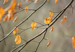 .:: As winter leaves ::. by Whimsical-Dreams