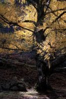Tree and light | Arbol y luz by 2Beita3