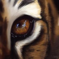 Eye of the Tiger by sofiaart