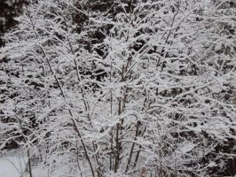 Snow Covered Branches by stevenvog9