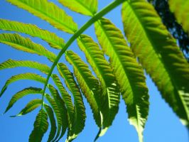 Giant Weed Frond by Sing-Down-The-Moon