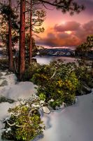 Three Redwoods and a Lazarus Bush by AugenStudios