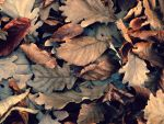 leaves by Arrakis7