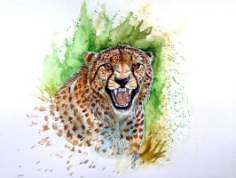 Watercolor - Cheetah by NadiavanderDonk