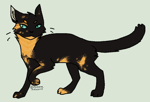Tortie by homeqrown