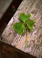 Three leaf clover. by stonesourgirl