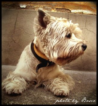 one of my dogs by soulisland