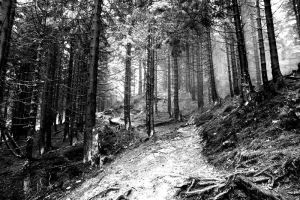 black and white road.. by kretka