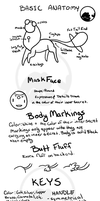 Secret Basic Anatomy Guide by Sharkysaur