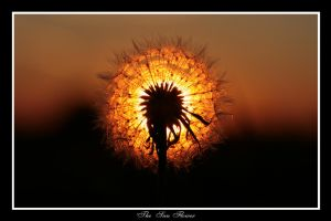 'The' sun flower by R3ality66