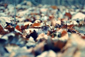 Leaves 4 by DeeethValley