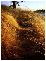 Path by isotopez