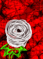 White Rose 2 by FEARxxMYxxFANGS