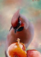 Waxwing and crabapples by nosoart