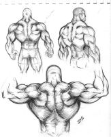 Muscular Back Study 01 by spacehater