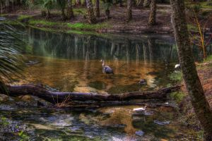 Birds HDR by zootnik