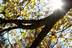The sun still shines in the fall by tararleigh