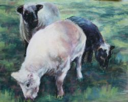 Sheep just Sheared by Wulff-Arts
