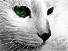 Fractalius Cat by noizkrew