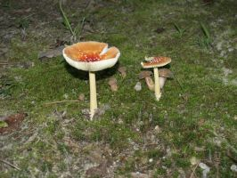 more mushrooms by Irie-Stock