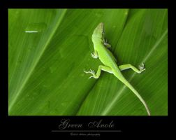 Green Anole by amberskyfire