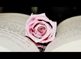 Rose For Editing Contest by UniversalOpera