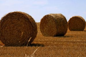 Hay Rolls 56853 by StockProject1