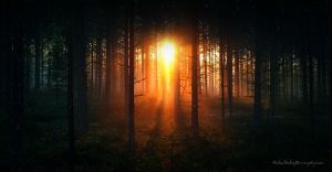 Mystic Forest by Stridsberg