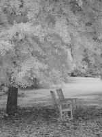 Under the shade tree 3 by redtailhawker