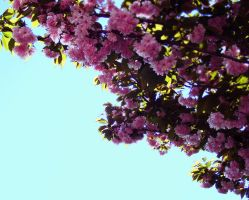 Flowered tree 4 by attilapele