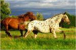 Horses 11 by Seiden-Stocks