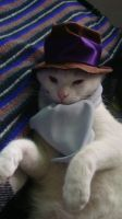 Rorschach Cat by HappilyDeluded889