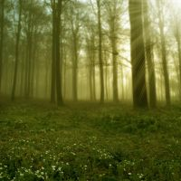 Elven Forest II by Lunia-Stock