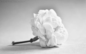 Colorless by Zayoon