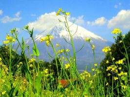 Mount Fuji 2011 by Druid55