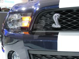 2010 Shelby GT500 - nose by Qphacs