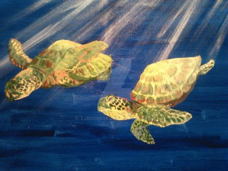 Sea turtles for mom up close. by Tjbocek88