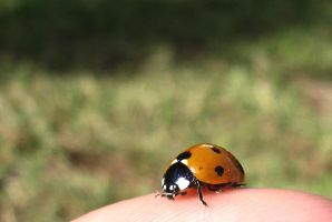 lady macro bug by CrowsShadow