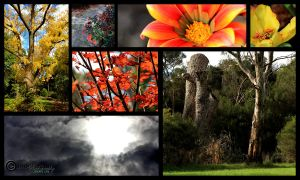 May 1st Photo Challenge: PEACE by IndifferentPhotos